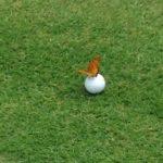 ゴルフの魅力の伝え方と先入観について