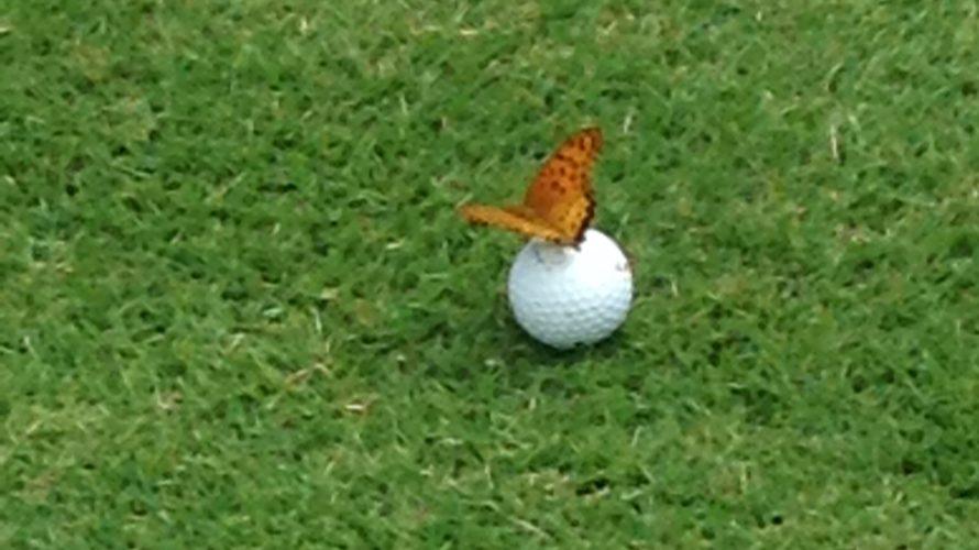 ゴルフを辞めたい。好きになれない方へ